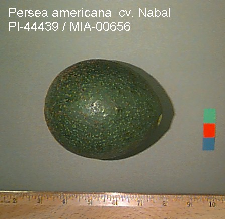 Nabal Avocado